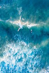 Surfing Birds