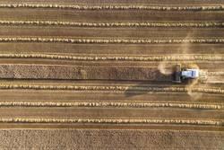 Mähdrescher erntet ein Getreidefeld im Abendlicht aus der Luft