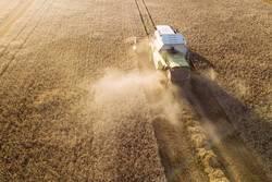 Mähdräscher erntet ein Getreidefeld im Abendlicht aus der Luft