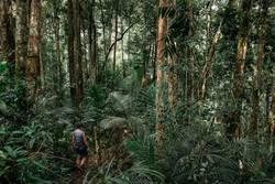 Frau wandert durch dicht bewachsenen Urwald