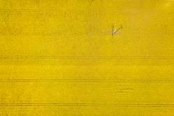 Gelbes Rapsfeld mit Strommast, Stromleitung und Spuren