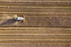 Mähdrescher erntet Getreidefeld im Abendlicht aus der Luft