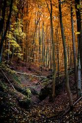 Rotkäppchenwald