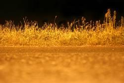 Gras by Night