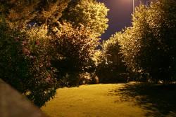 My Garden is my Nightlife