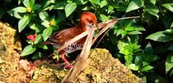 Vogel am Nestbau