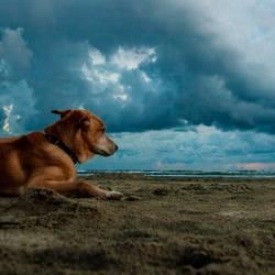 Hund(ert)