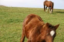 pferdische bewegung
