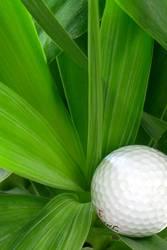 Morgenstund hat Golf im Mund