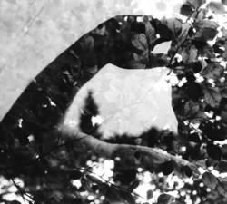 Salutieren im Blätterwald