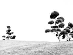 Schwart & Weiß natur 1