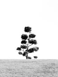 Schwart & Weiß Natur 2