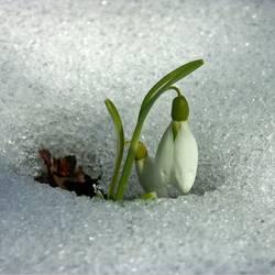 Schnee trifft Glöckchen