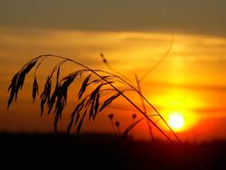Gras vor der Sonne