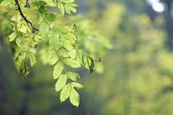 60 Blätter