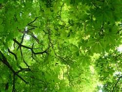 Grün für Anfänger