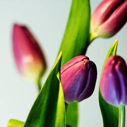 flower power A
