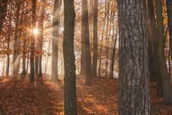 Herbstlich_T