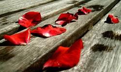 Rosenblätter...