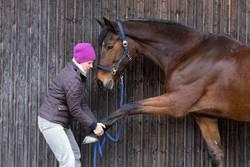 Streching für Pferde