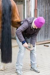 Pferdehufe auskratzen