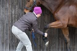 Gymnastik für Pferd und Reiter