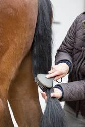 Pferdepflege - Der Schweif