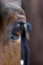 Spiegel der Pferdeseele