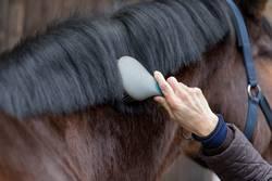 Beim Pferdefriseur