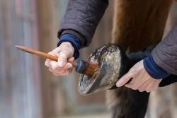 Pferdepflege - Huf pflegen