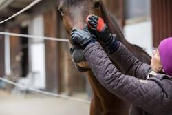 Ein Grinsen im Pferdegesicht