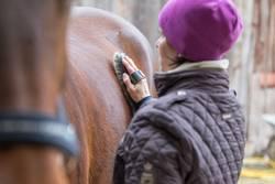 Reiterin putzt Ihr Pferd