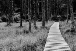 Streif(en) im Wald