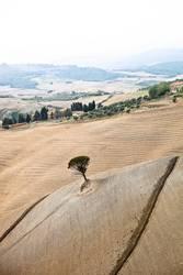 tuscany tree