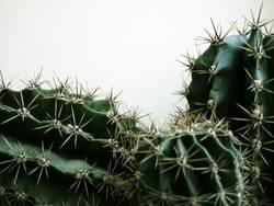 kaktus(se)