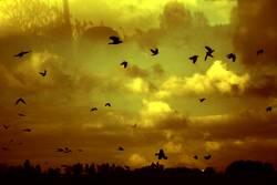 TRAUM°BILDER # burning heaven ´´'´'``