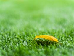 Yellow leaf on the artificial grass