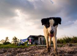 Dog in the temporary house of construction worker