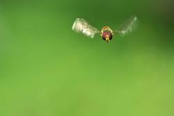 Free like a bee