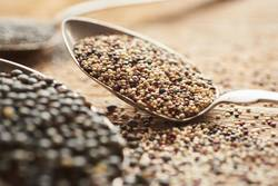 white, red and brown quinoa seeds on silver spoon