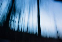 abstract trees at twilight hour