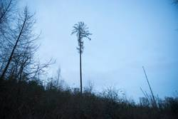 Waldlichtung zur blauen Stunde