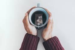 teacup between hands