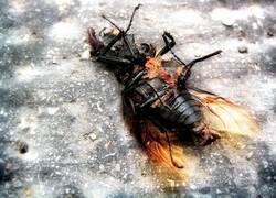 Käfer in der Stadt