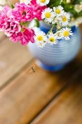 Gartenblumen für Ces