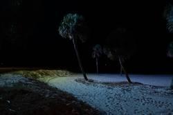Dunkler Strand mit Palmen