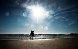 waterdog