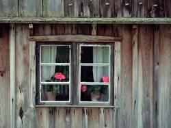 Flowers in the window