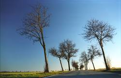 Trees grow one way
