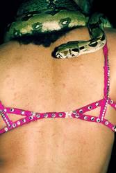 Trau der Schlange nicht!